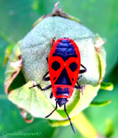 The Tribal Insect... Made in Tonga Islands? by Cloudwhisperer67