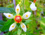 The Mesmerizing Helix Flower