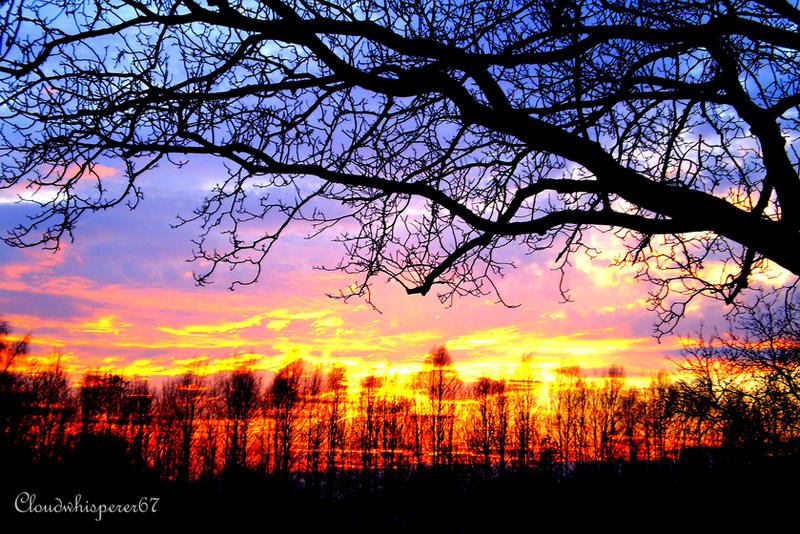 Fairy Sunset Fury Sky And Trees Silhouette By Cloudwhisperer67