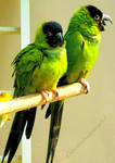 Funky Green and Black Parrots
