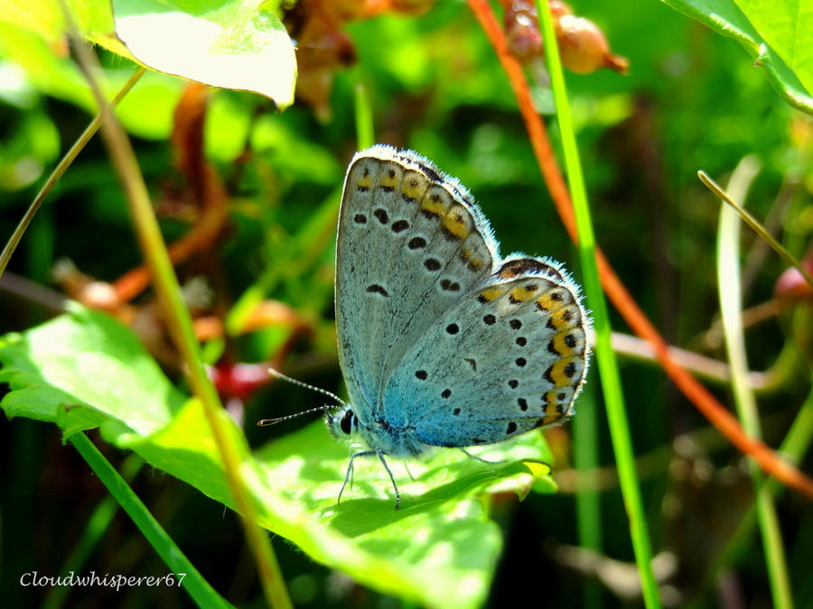 Adorable White and Blue Butterfly by Cloudwhisperer67