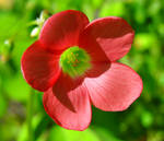 Red Petals, Green Heart