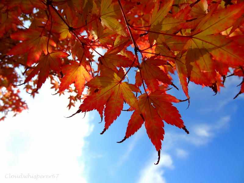 Fall Blaze by Cloudwhisperer67