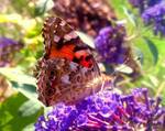 The welcoming sunbathing butterfly