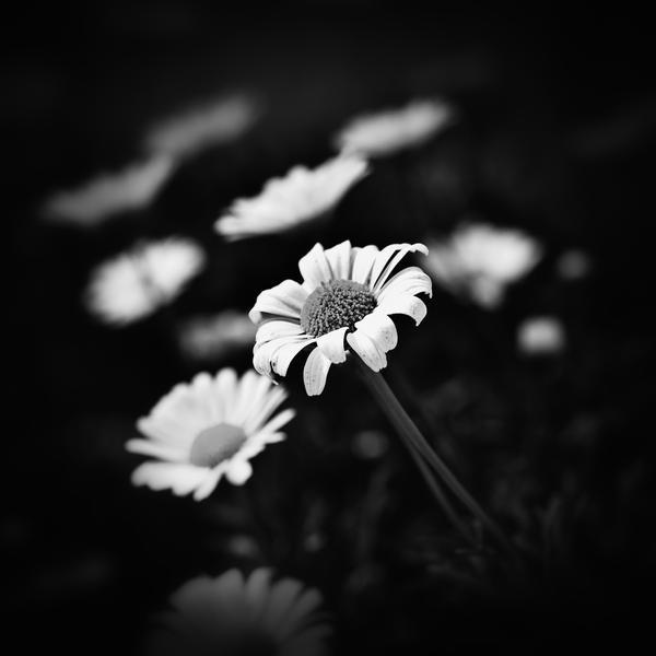 flower 83 by AlexGrifo