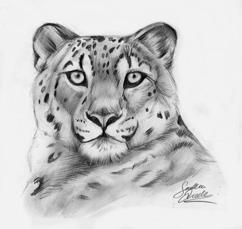 Leopard Pencil Drawings Pencil leopard by TheM...