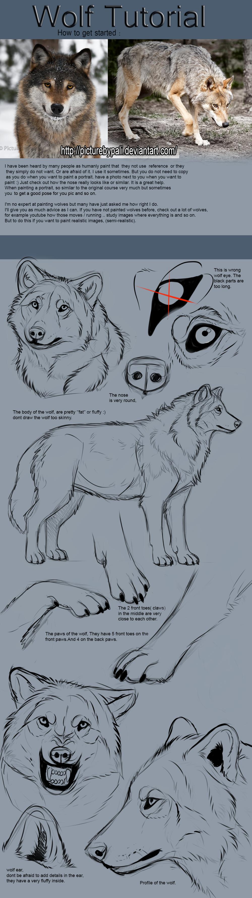 http://fc03.deviantart.net/fs71/f/2013/202/c/f/wolf_tutorial_by_themysticwolf-d61lwki.png