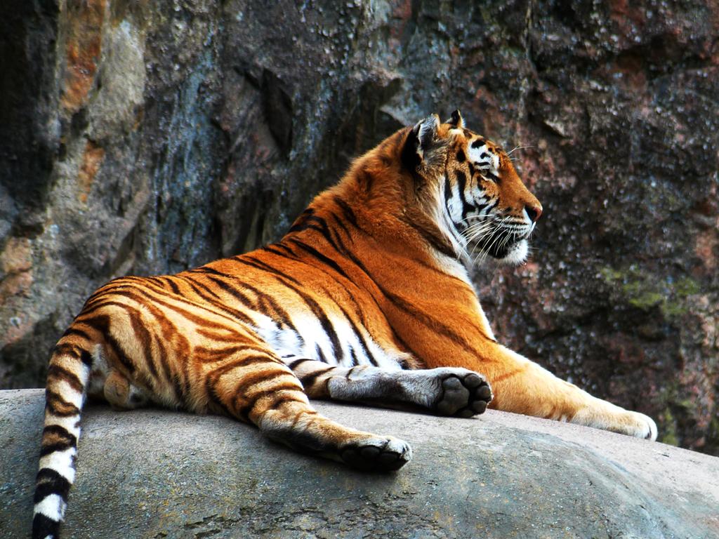 Tiger18 by TheMysticWolf