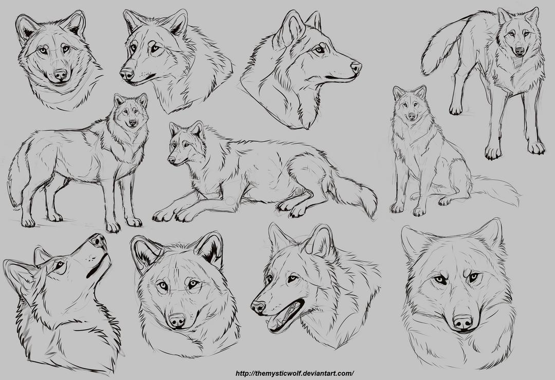 Wolf studies by TheMysticWolf on DeviantArt