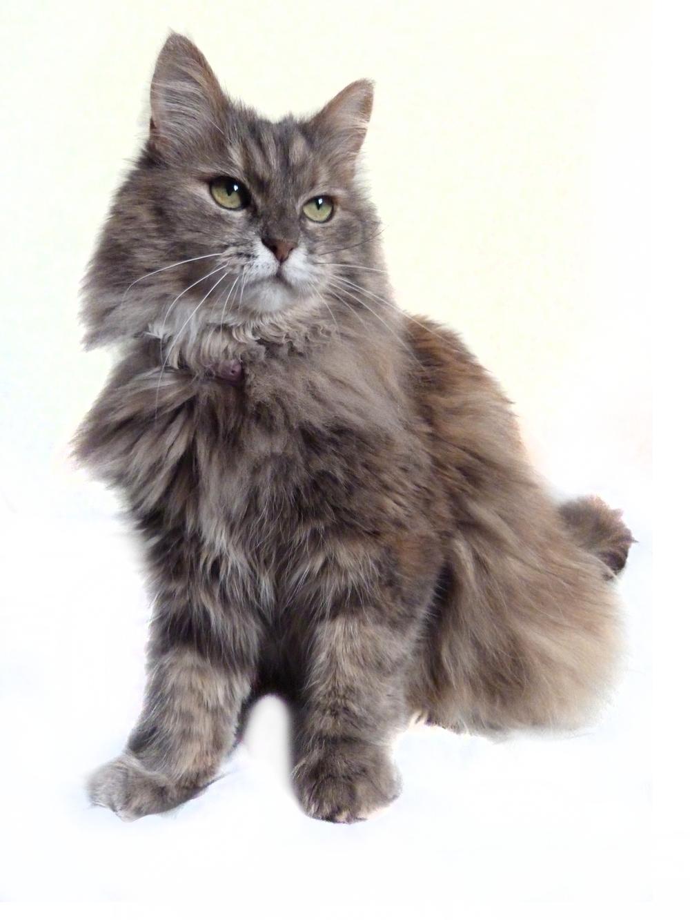 Mystic Cat Video Removed