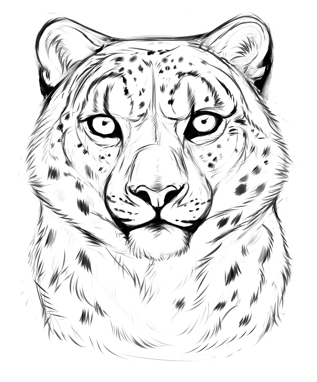 how to draw a snow leopard face photo23