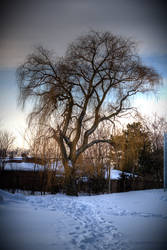 Tree by Jay-san1292