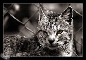 Streetcat by ArcAngelTyrael
