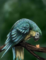 parrot by Night-Owl-23