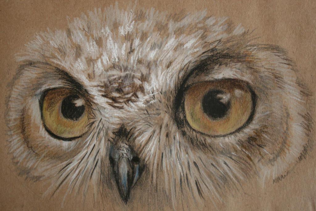 Owl by Night-Owl-23