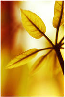 Touch Of Autumn by Sortvind