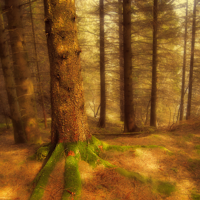 Within the Peace by Sortvind