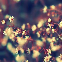 Secret Garden by Sortvind