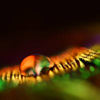 Life is Magical by Sortvind