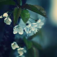 Fading Dreams by Sortvind
