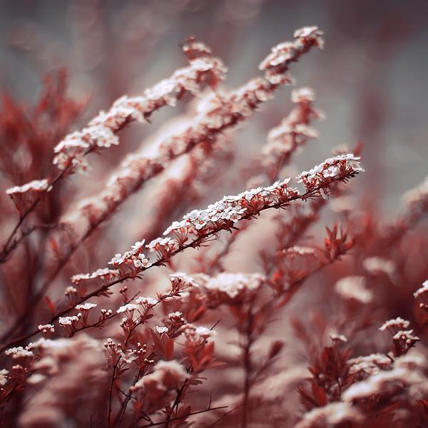 Mystic Garden by Sortvind