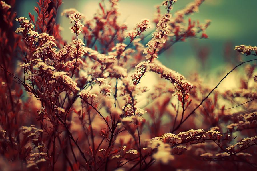Vintage Garden by Sortvind