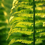 Green World by Sortvind
