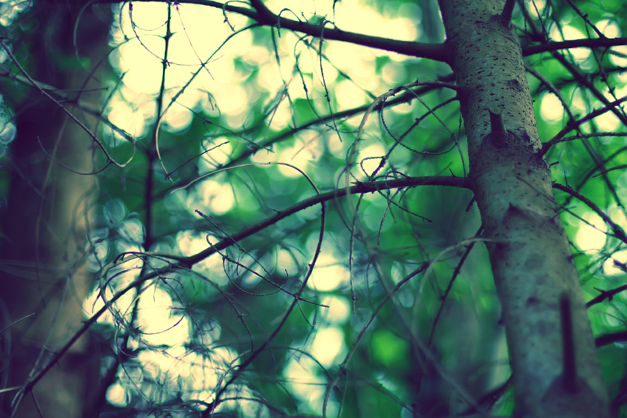 Forest of Dreams by Sortvind