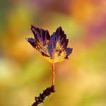 Autumn Sun by Sortvind