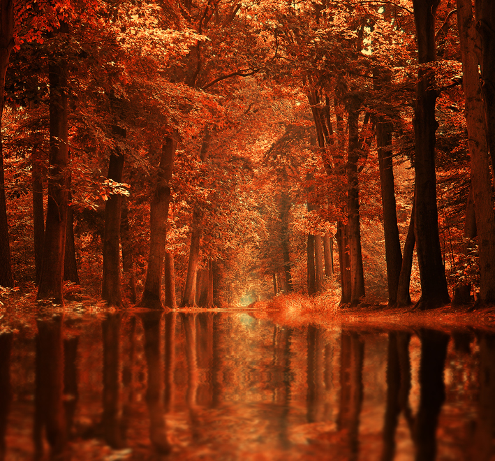 The Dream Forest by Sortvind