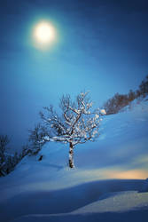 At the Heart of Winter