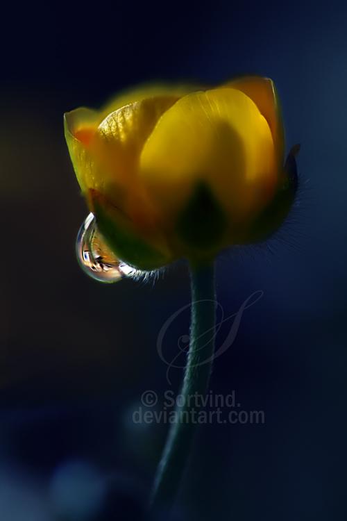 You Still Shine by Sortvind