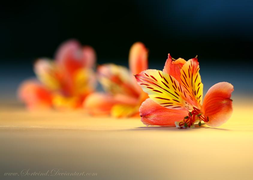 Rainbow Bokeh by Sortvind