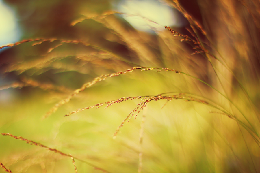 Autumn Winds by Sortvind