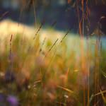Autumn Colors by Sortvind