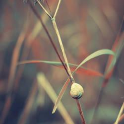 Autumn Snail by Sortvind