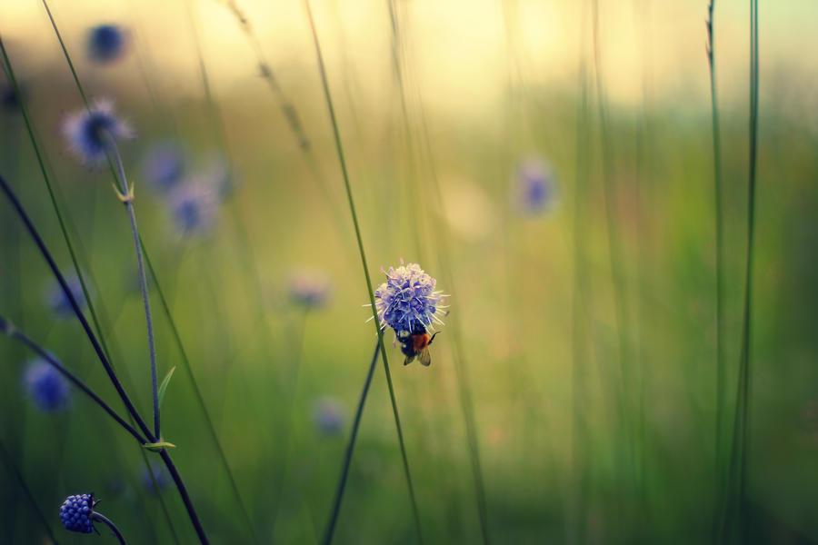 Autumn Bee Wallpaper by Sortvind