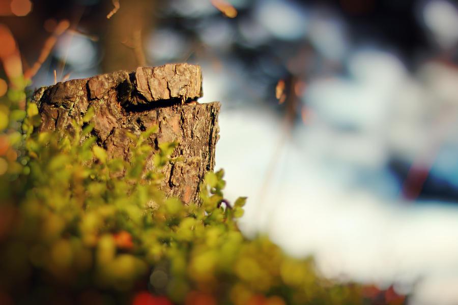 Autumn Bokeh Wallpaper by Sortvind