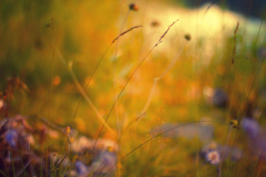 Autumn Dream Wallpaper by Sortvind
