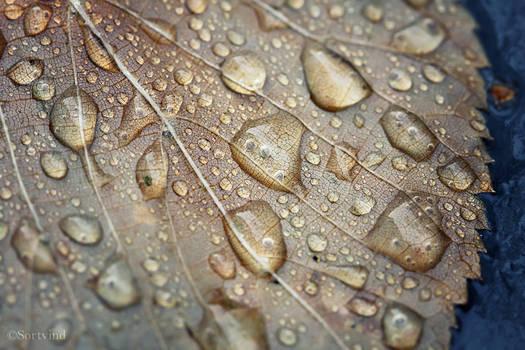 Rainy Texture