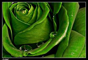 Natures beauty by Sortvind