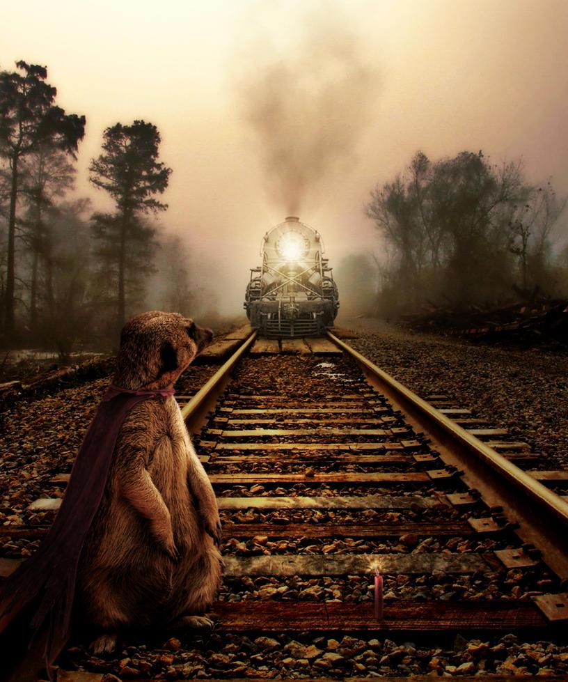 Super-Meerkat by Splat-Shot