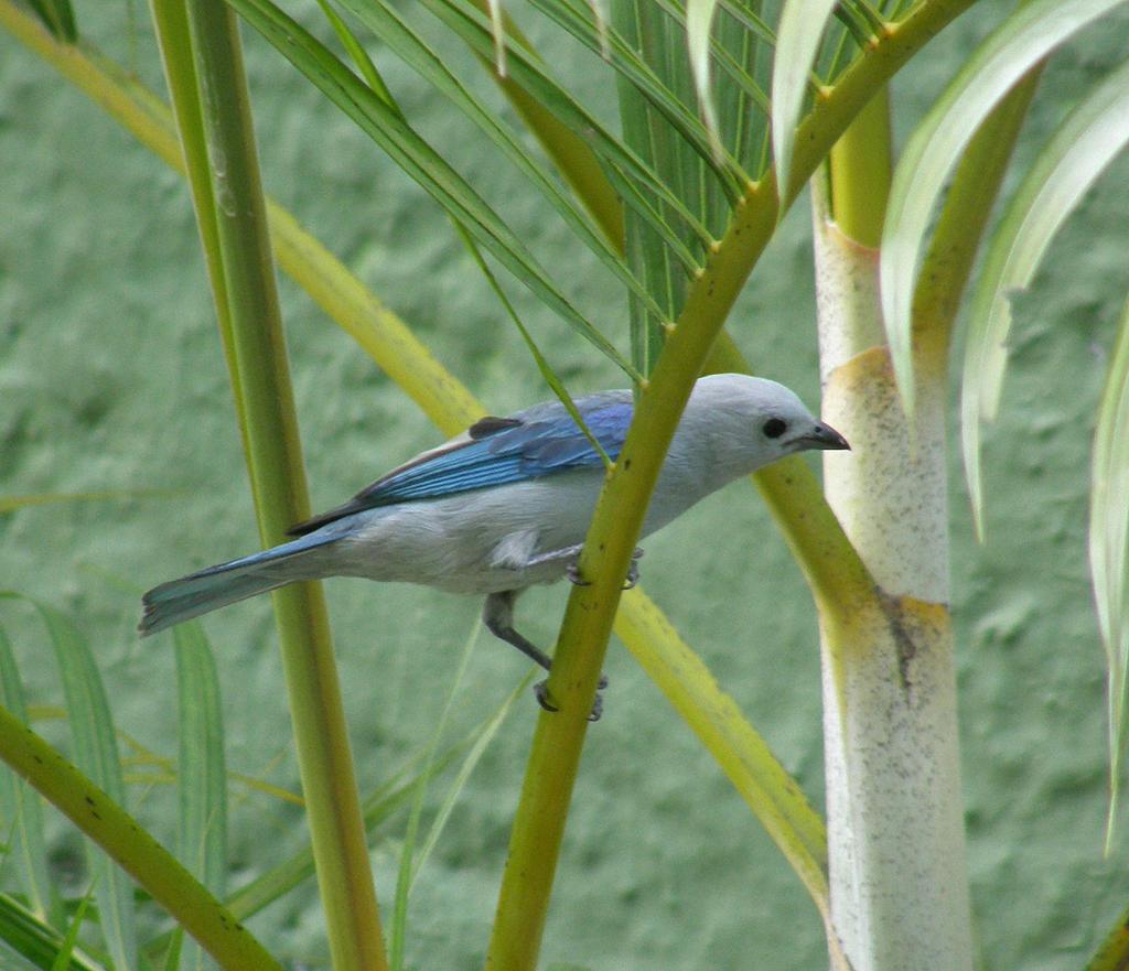 Bird 09 by leona007