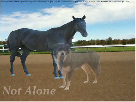 Manip For WOS Border Collie-Not Alone