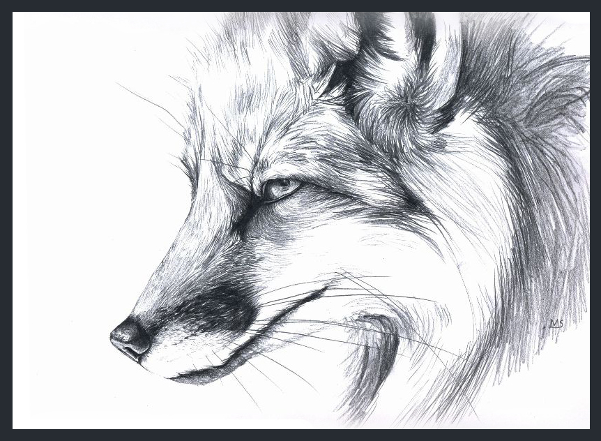 Fox Pencil Drawing Pencil Drawings of Foxes