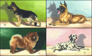 Dogs by Tervola
