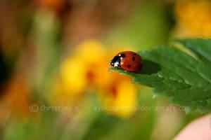 Ladybugs Life II by kyokosphotos