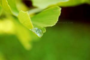 green vitality by kyokosphotos