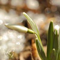 primavera by kyokosphotos