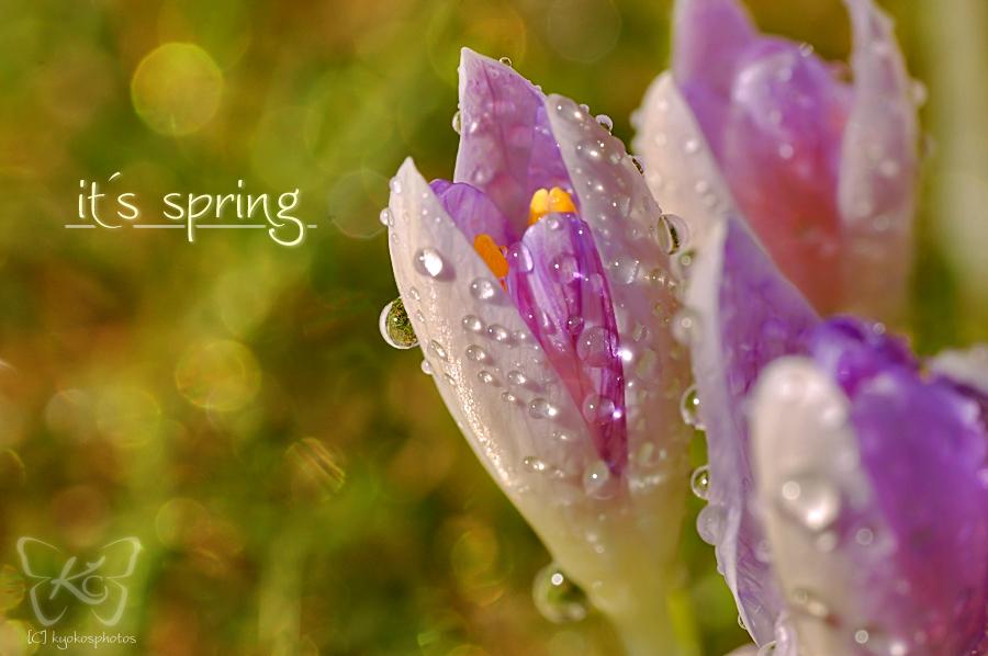 its spring by kyokosphotos